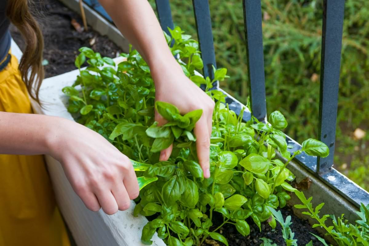 the-7-easiest-herbs-to-grow-in-an-apartment-garden